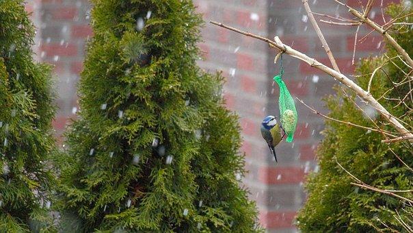 Animal, Bird, Tit, Blue Tit, Attention, Hungry