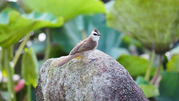Nature, Wildlife, Outdoors, Animal, Tree, Bird, Little