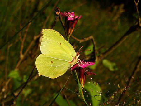 Nature, Flower, Butterfly Day, Insect, At The Court Of