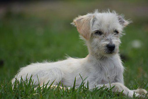 Canis Lupus Familiaris, Animalia, Nice, Pet, Lawn