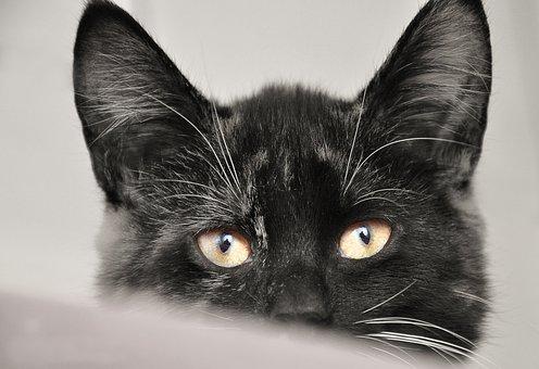 Cat, Animal, Animal Shelter, Pet, Cute, Mammal, Black