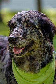 Animal, Portrait, Cute, Dog, Nature, Marktredwitz