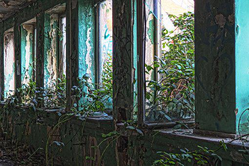Architecture, Leave, Old, Building, Empty, Window, Ivy