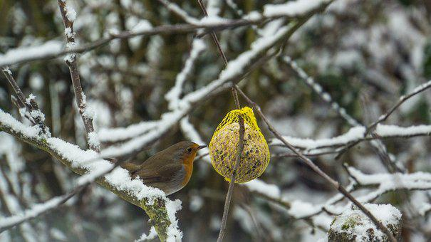 Nature, Tree, Winter, Branch, Frost, Bird, Robin