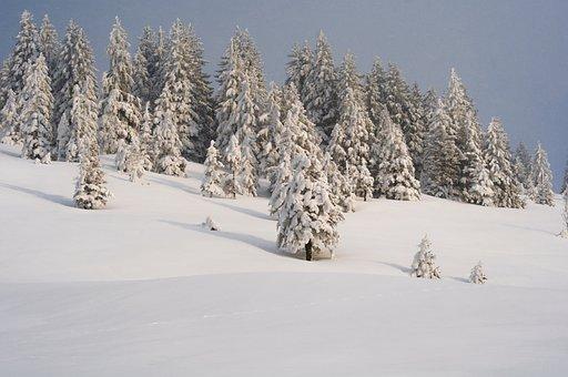 Snow, Winter, Cold, Frost, Frozen, Snowy, Tree