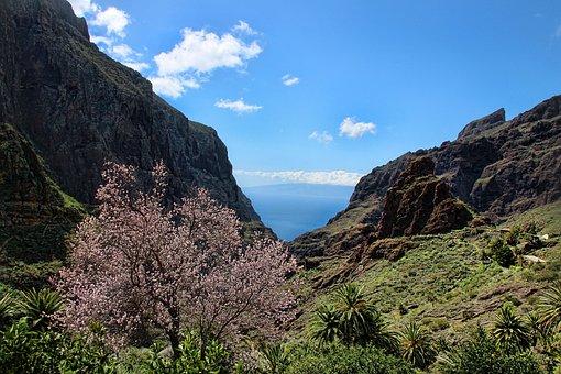 Tenerife, Masca, Gorge, Nature, Mountain, Landscape