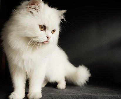 Cat, Cute, Kitten, Mammal, Pet, Hilarious, Funny