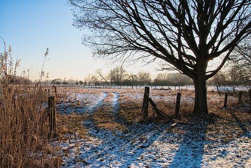 Tree, Nature, Landscape, Laatzen, Leinemasch, Winter