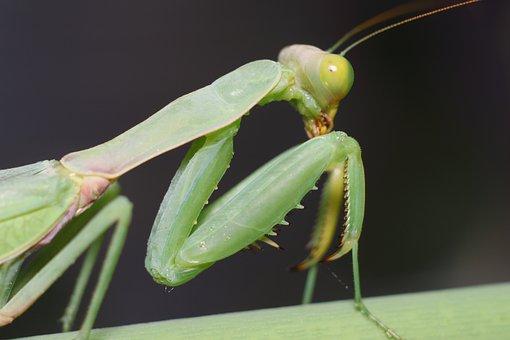 Bespozvonochnoe, Insect, No One, Sheet, Living Nature