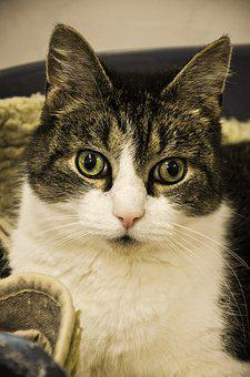 Cat, Animal Shelter, Mackerel, Animal Welfare, Mieze