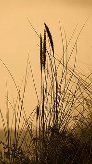 Nature, Fragile Grass In The Wind, Island Oleron