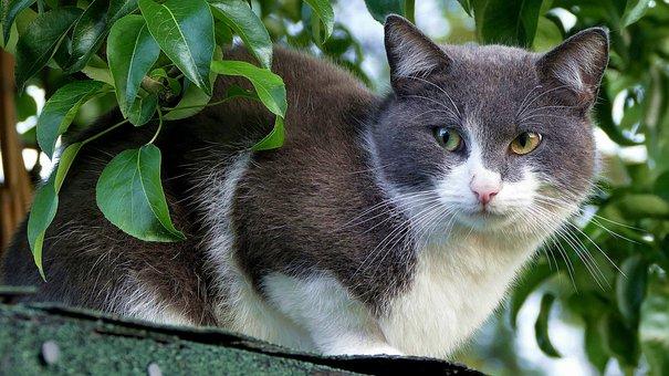 Cat, Domestic Cat, Cute, Animal, Nature, Mammal