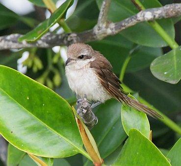 Bird, Wildlife, Tree, Nature, Outdoors, Little, Animal