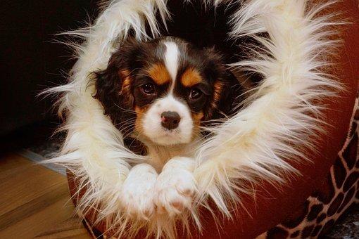 Puppy, Animal, Mammal, Portrait, Dog, Pet, Small Dog