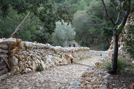 Nature, Stone, Tree, Outdoor, Sandstone, Old Road