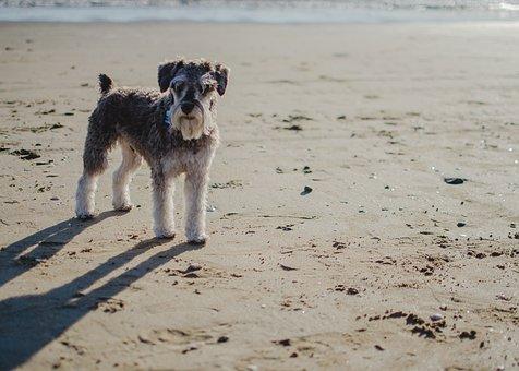 Beach, Body Of Water, Sea, Sand, Veterinary, Dog