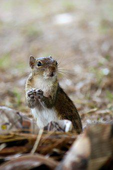 Squirrel, Animal, Wild, Park, Little, Cute, Face