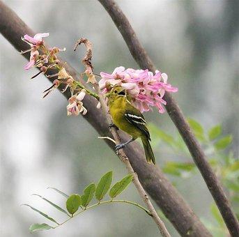 Tree, Nature, Branch, Bird, Wildlife, Flower, Songbird