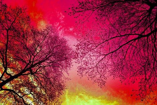 Tree, Tree Top, Crown, Silhouette, Tree Silhouette