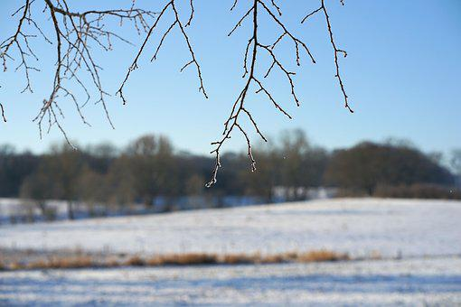 Branch, Frost, Winter, Nature, Tree, Snow, Sky, Sun