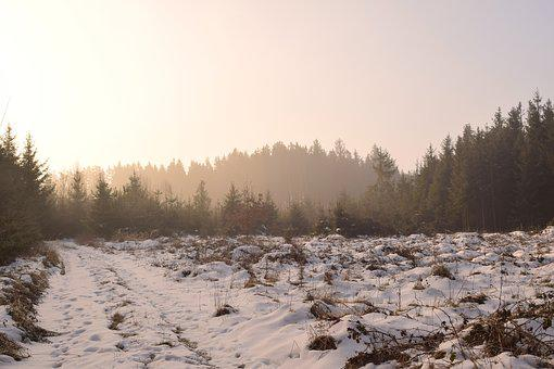 Snow, Winter, Frost, Nature, Cold, Sunrise, Haze, Trees