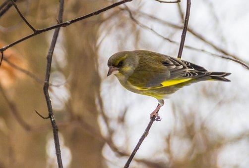 The Birds, Wild Animals, Nature, The Song Of A Bird