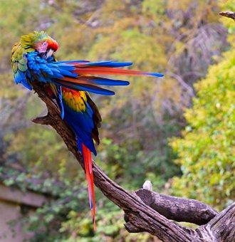 Bird, Nature, Fauna, Pen, Parrot, Wild, Beak, Wing