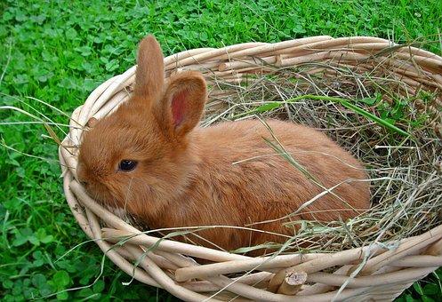 Animals, Bunny, Charming, Lawn, Shopping Cart