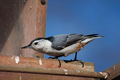 Bird, Wildlife, Outdoors, Nature