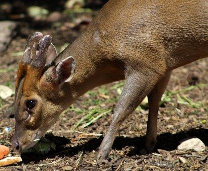 Mammal, Wildlife, Animal, Nature, Deer, Fawn