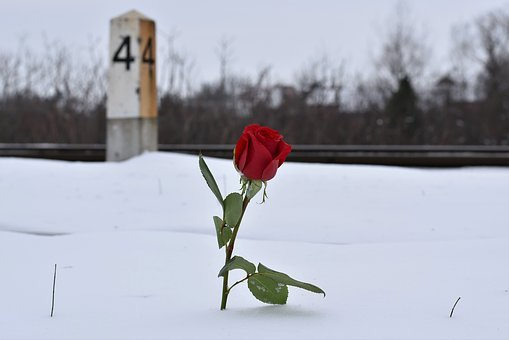 Red Rose In Snow, Eternal Love Symbol, Railway