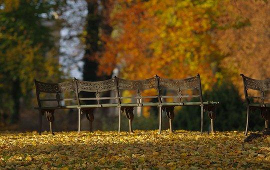 Autumn, Park Bench, Wrought Iron, Evening Sun, Tree