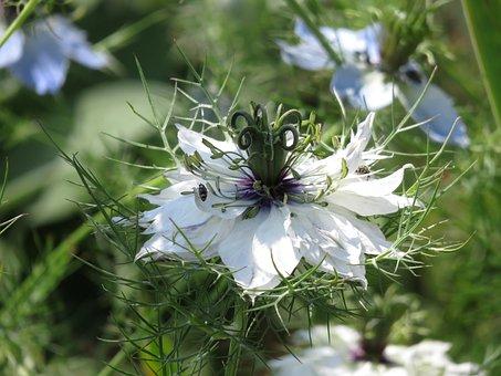 Nature, Flower, Plant, Virgin, Green, Farbenpracht