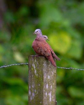 Birds, Nature, Wildlife, Animal, Wild, Fence, Post