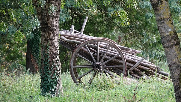 Old Cart, In Charge Of The Old Wood