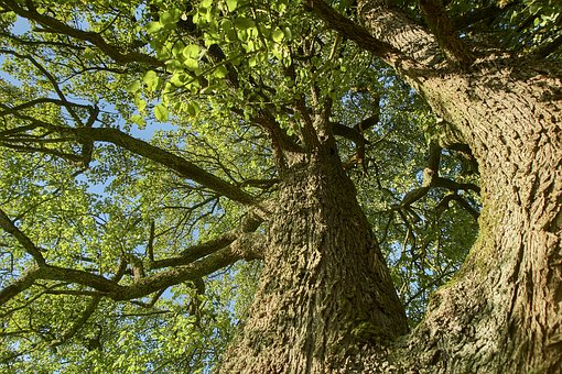 Tree, Nature, Wood, Leaf, Plant, Bark, Landscape, Tribe