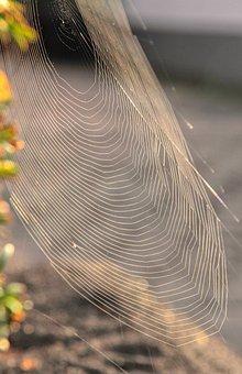 Nature, Weave, Cobweb