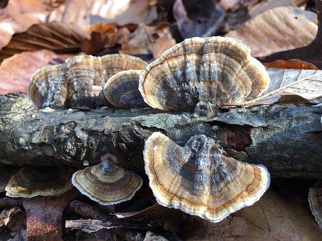 Nature, Fungus, Mushroom, Food, Shellfish