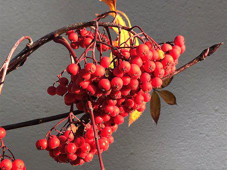 Fruit, Nature, Food, Berry, Bright, Season