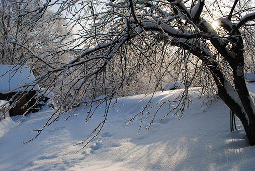 Winter, Snow, Tree, Coldly, Leann, Frozen, Nature