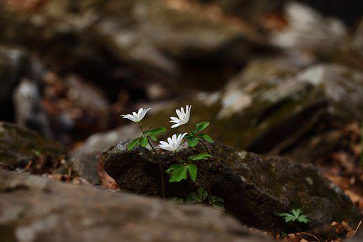 Nature, Outdoors, Leaf, Plants, Wildflower