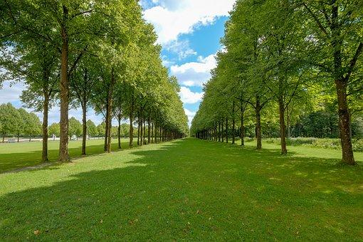 Grass, Tree, Nature, Rush, Summer, Landscape, Park