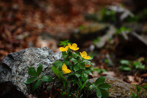 Nature, Leaf, Plants, Outdoors, Season, Spring Flowers