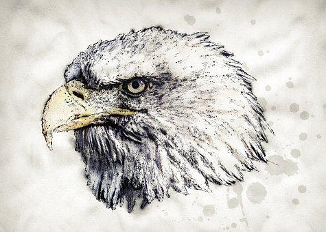 Adler, White Tailed Eagle, Bald Eagle, Bird, Raptor