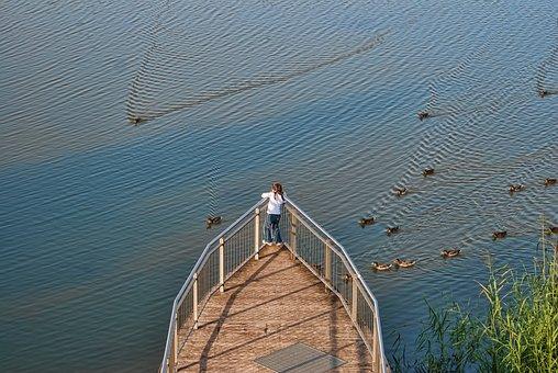 Waters, Nature, Reflection, Bridge, Wood, Lake, Summer