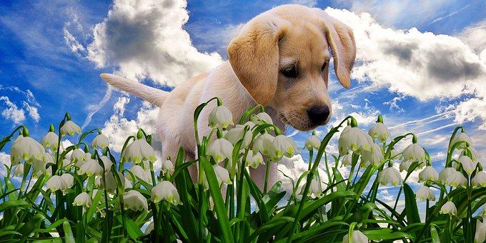 Nature, Spring, Snowflake, Flower, Plant, Blossom