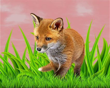 Animal, Sky, Background, Lawn, Fund Animal, Texture