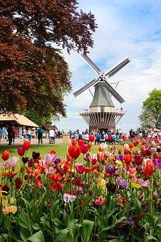 Flower, Windmill, Amsterdam, Netherlands, Tulips