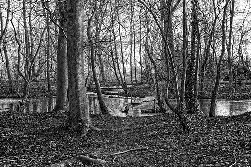 Tree, Wood, Pontoon, Bridge, Frozen, Moat, Frozen Over