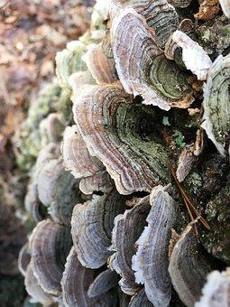 Nature, Fungus, Tree, Wood, Flora